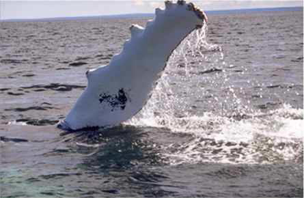 Fin Tailing Whale